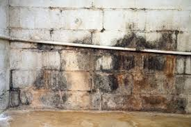 Anti Mould Spray For Painted Walls - what paint or coating products will cure damp walls never paint