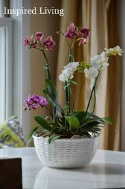 orchid centerpiece inspired living easy orchid centerpiece