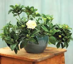houseplants that need little light houseplants that need little light interior design ideas avso org