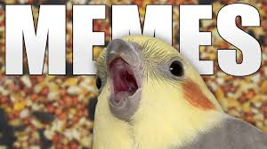 Funny Bird Memes - bird memes youtube