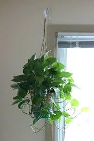 live indoor plants best indoor hanging plants onewayfarms com