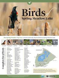 birds of spring meadow lake by montana outdoors issuu