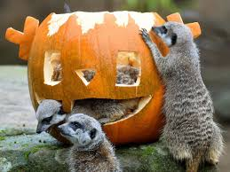 scary cute pictures of animals with jack o lanterns best 20 best