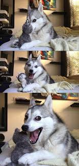 Pun Meme - pun husky pun dog know your meme