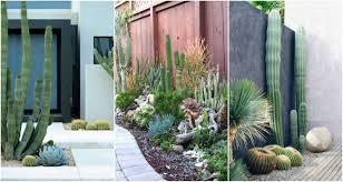Cactus Garden Ideas Outdoor Cactus Garden Ideas For The Best Looking Landscape