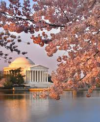 guide to the national cherry blossom festival washington org