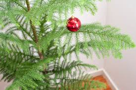 photo of pine christmas tree with a red bauble free christmas images