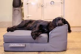 Dog Chaise Chaise Chien