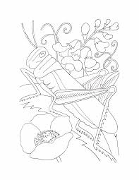 butterflies and insects coloring pages 33 butterflies and