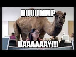 Hump Day Camel Meme - geico hump day remix youtube