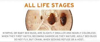 One Bed Bug Easing Your Mind About Bed Bugs Tmi Hospitality