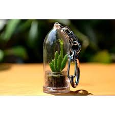 coral cactus live plant keychain cactus terrarium gift walmart com