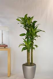 floor plant our diverse plant selection greencare interior plants houston tx
