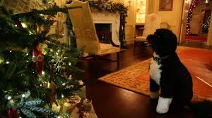 bo inspects the 2012 white house decorations