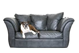 Clean Leather Sofa by How To Clean A Dog Urine Stain On A Leather Couch Thriftyfun