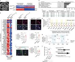 BRAF somatic mutation contributes to intrinsic epileptogenicity in