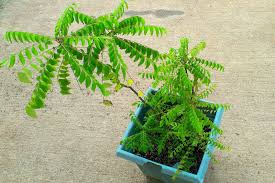plants native to india how to grow a space saving herb garden at home in india