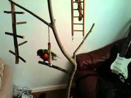 bird tree stand