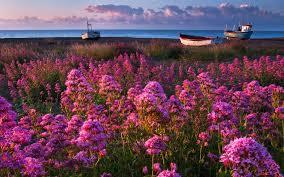 Beautiful Plants by Beach Beautiful Water Wildflowers Oceans Amazing Clouds Coast