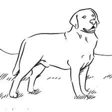 coloring labrador retriever fresh labrador retriever coloring