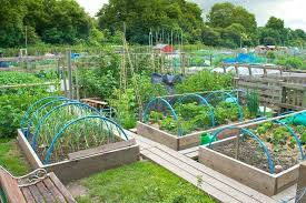 Kitchen Garden Designs Vegetable Garden Ideas Vertical Vegetable Garden Backyard