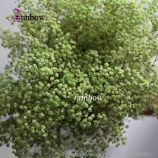 Baby S Breath Wholesale Cheap Preserved Babys Breath Gypsophila Wholesale Preserved Babys
