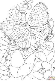 butterfly among flowers coloring page photo in coloring pages