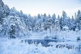 frosted pine trees along frozen river time stock photo