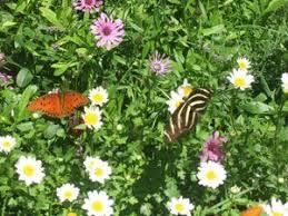 Urban Garden Phoenix - 153 best arizona images on pinterest arizona gardening desert