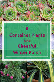 container gardens for winter home outdoor decoration