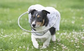 Pictures Of Blind Dogs Best Device You Can Buy For A Blind Dog