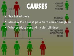 What Causes Red Green Color Blindness Color Blindness By George Bevis