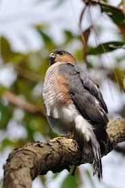 top 10 most popular bird species of 2011