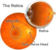 What Is Congenital Blindness Medical Eye Center Retinal Diseases That Cause Blindness Medford