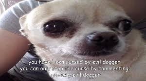 Go Away Meme - evil dogger bald memes wikia fandom powered by wikia