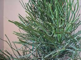 Best Low Light Houseplants Low Light Indoor Plants 12 Best Plants That Can Grow Indoors