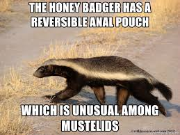 Honey Badger Meme Generator - the honey badger has a reversible anal pouch which is unusual among