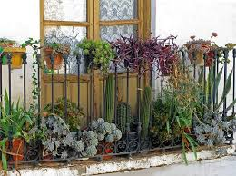 flickr find balcony of succulents balcony gardening balconies