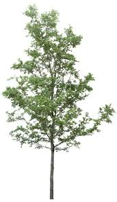 best 25 tree psd ideas on pinterest 3d rendering rendering