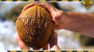 how to open coconuts without any tools youtube