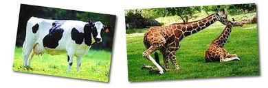 imagenes de animales carnivoros para imprimir animales herbívoros carnívoros y omnívoros