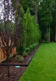 best 25 backyard trees ideas on backyard privacy