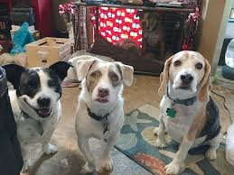 how to get dog to stop barking how to get a pack of five dogs to calm down reduce stress and