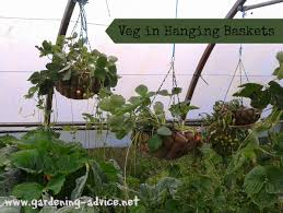 growing vegetables in containers vegetable container gardening tips