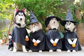Halloween Costumes Dogs Cutest Puppy Costumes 2011 13 Awesome Halloween Costume Ideas Husky Dogs