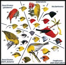 Hawaii birds images Protect hawaii 39 s stunning endangered forest birds indiegogo png