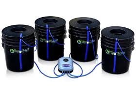 hydroponic tomato growing systems for home gardeners