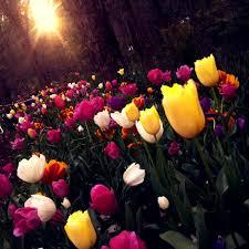 free stock photos of flower garden pexels