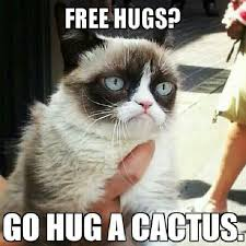 Sarcastic Cat Meme - pin by ashley clark on grumpy cat lmfaoooo pinterest free hugs