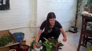 how to green your home part 2 build a mason jar herb garden